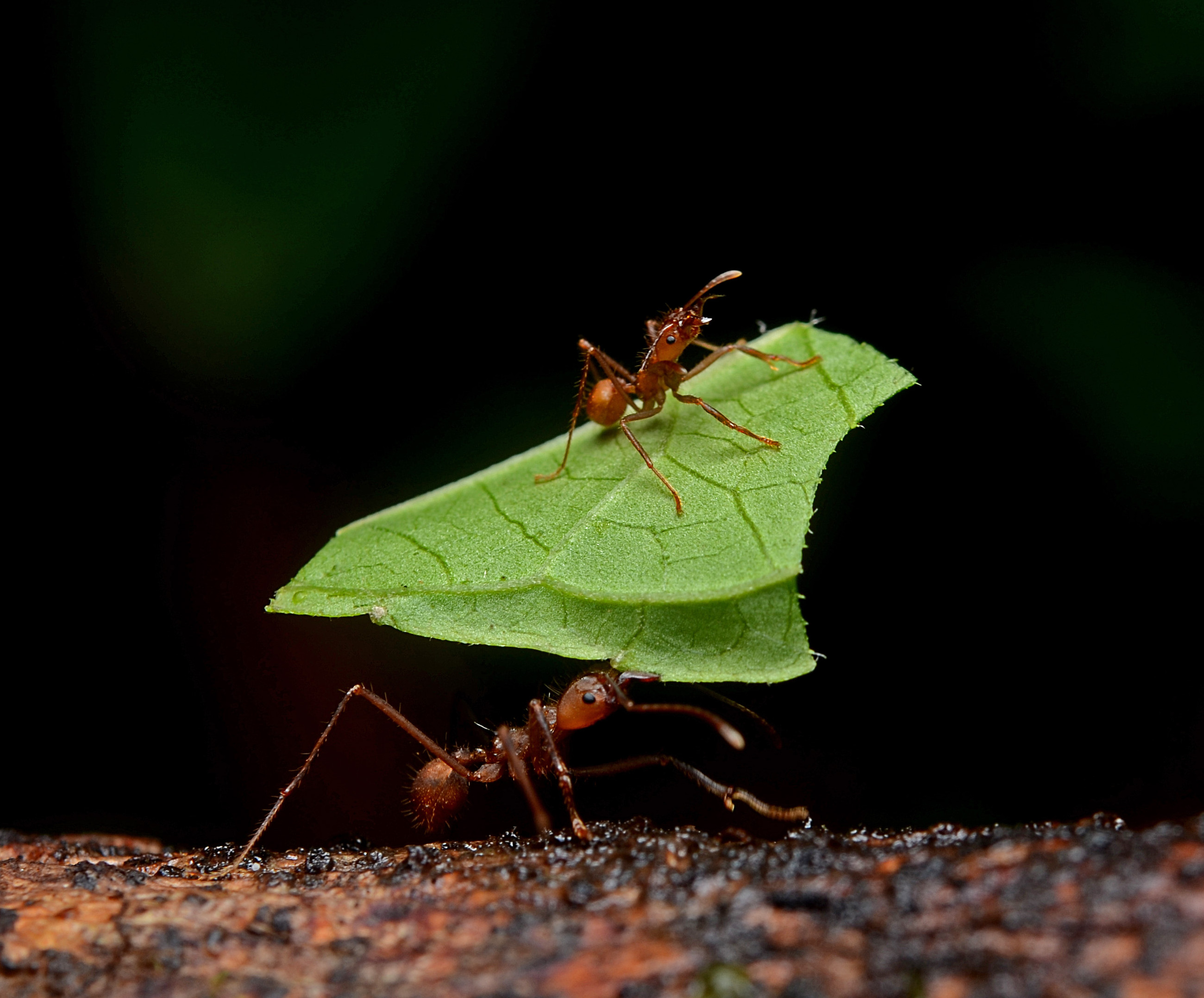 Can Ants Contaminate Dog Food